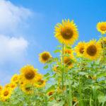 image2 150x150 - おそろしい夏が今年もやってくる!!体臭対策できてますか?